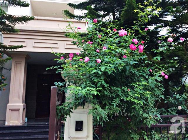 Vẻ đẹp duyên dáng của khóm hồng rực rỡ ngay cạnh cổng vào nhà.