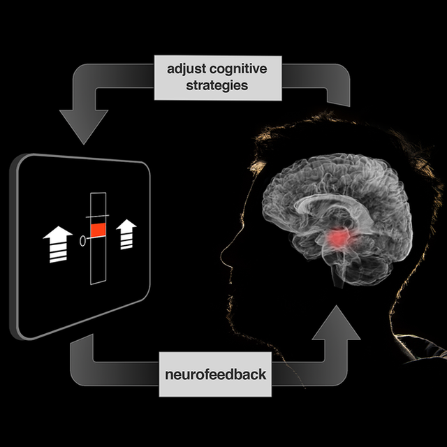 Một hệ thống fMRI thời gian thực, nơi người tham gia có thể nhìn thấy những gì đang diễn ra trong não bộ mình.