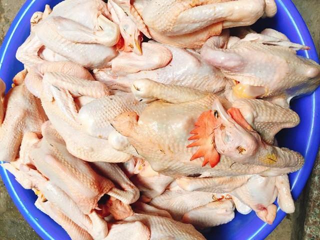 Giá của loại gà ri này chỉ 60.000-70.000 đồng/con