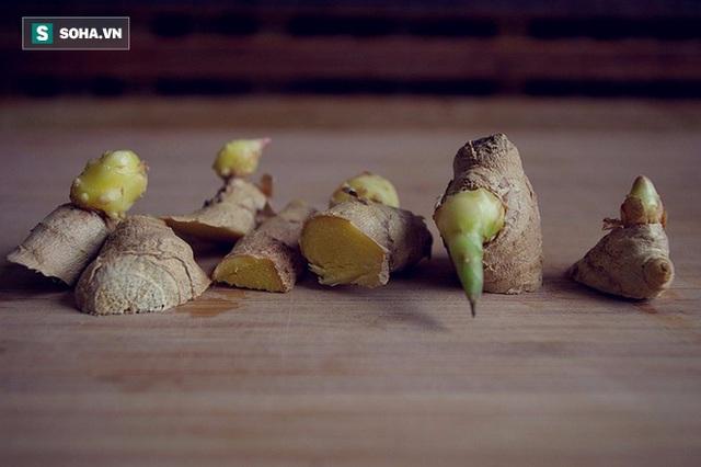 Gừng mọc mầm không còn giá trị dinh dưỡng nữa.