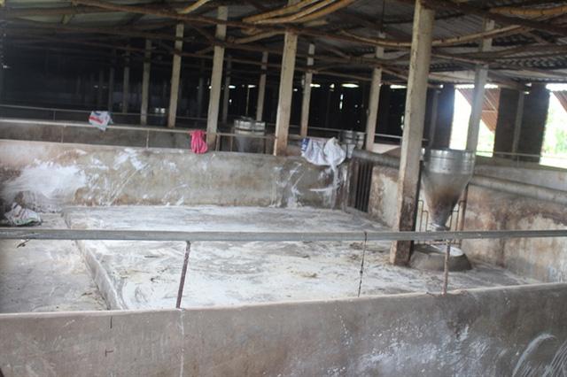 Nhiều trang trại chưa có ý định chăn nuôi trở lại dù giá lợn đã tăng