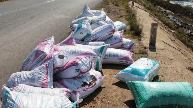 Ốc hương tại Ninh Thọ bị chết, người dân thiệt hại nặng
