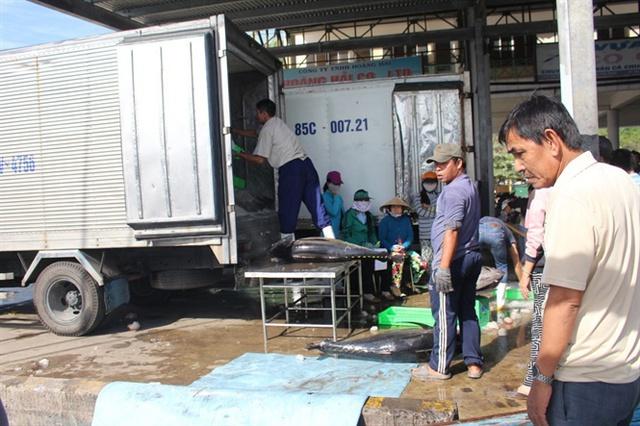 Hoạt động mua bán cá ngừ đại dương ở cảng Hòn Rớ hiện nay vô cùng ảm đạm vì sản lượng đánh bắt thấp