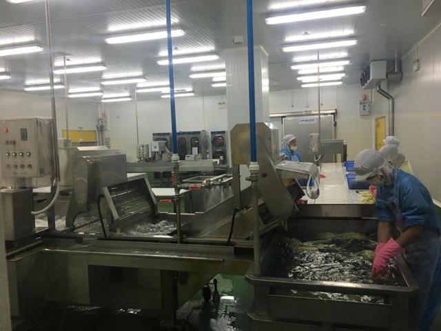 Nguyên liệu kim chi được xử lý trong dây chuyền hiện đại từ Hàn Quốc
