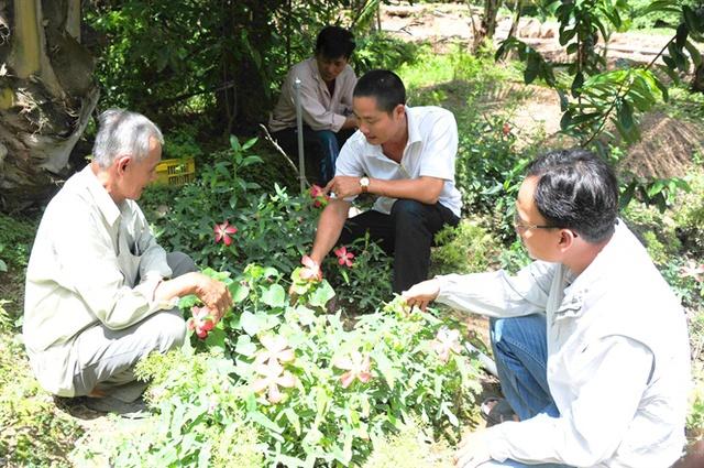 Anh Định bên vườn trồng cây đinh lăng, sâm bố chính mỗi năm cho thu nhập hơn 1 tỷ đồng