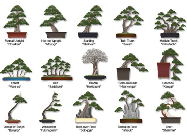 Những thế bonsai kiểu mẫu.