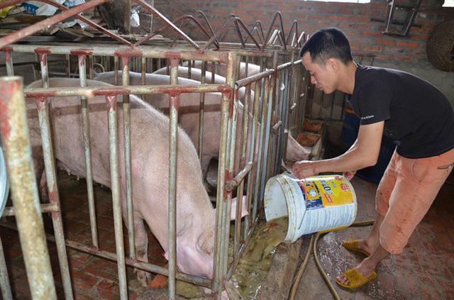 Người nuôi lợn Việt Nam đang chịu thiệt lớn