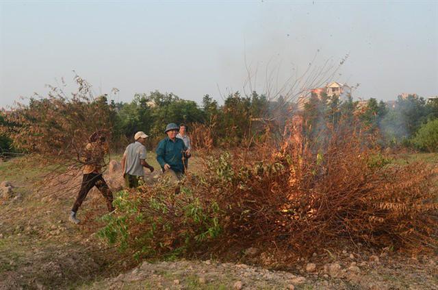 Thân đào chết được nông dân địa phương tập trung để đốt