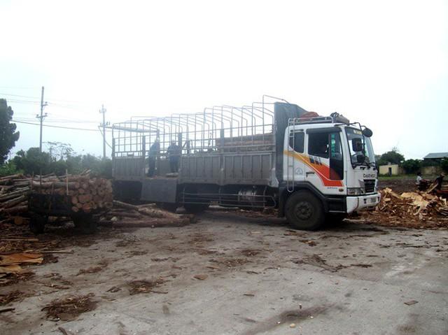 Các DN dăm gỗ phải tạm dừng thu mua gỗ nguyên liệu