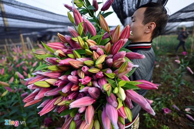 Một bó hoa ly 3 tai hiện được bán 200.000 - 250.000 đồng, ly 5-7 tai giá khoảng 400.000 đồng.