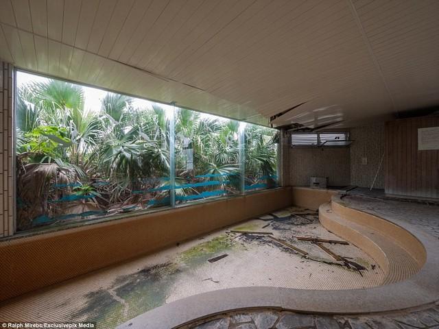 Rêu mọc lên lớp gạch lót của bể bơi nhỏ cạn nước.