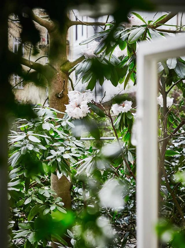 Góc thiên nhiên tuyệt đẹp ngoài vườn cây nhìn từ cửa sổ phòng khách.