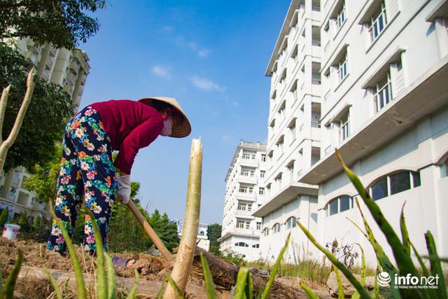 Người dân tận dụng phần đất xung quanh để trồng rau. Cô Thu (Cư dân khu Phúc Đồng) chia sẻ, những tòa nhà này bị bỏ hoang đã hơn chục năm không có người ở. Vì tiếc phần đất xung quanh nên nhiều hộ gia đình cũng tự tận dụng để trồng thêm rau quả.