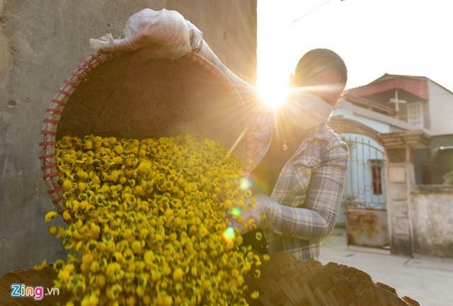 Chị Băng, chủ cơ sở Băng Chung cho biết với giá nhập hoa tươi 30.000 đồng/kg thì việc sấy hoa chỉ lấy công làm lãi. Cơ sở của chị sấy rất nhiều loại thảo dược khác nhau nên có thể lấy loại nọ để bù loại kia.