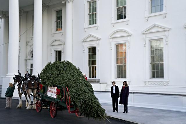Phu nhân Melania Trump và quý tử Baron đang đón cây thông khổng lồ được kéo bởi cỗ xe hai ngựa vào dinh tổng thống Hoa Kỳ.