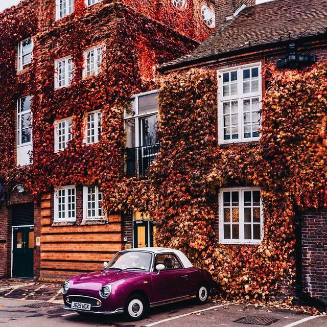 Một chiếc ô tô màu hồng đậu ngoài căn nhà đầy những dây leo màu đỏ.