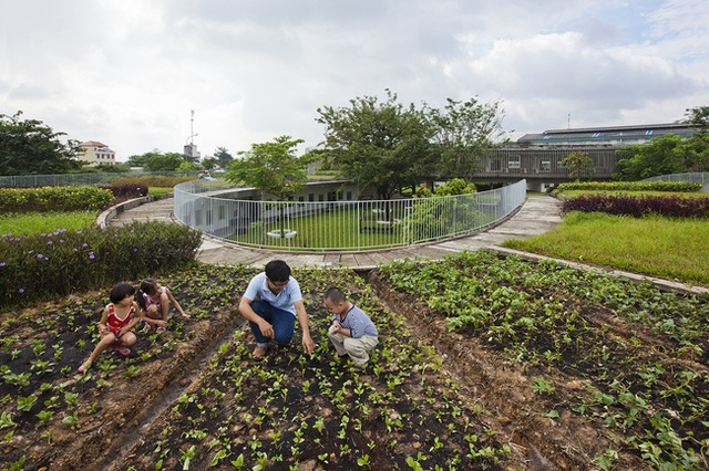 Điều đặc biệt và ấn tượng nhất nơi đây là tại khu vực trồng rau trên mái nhà.