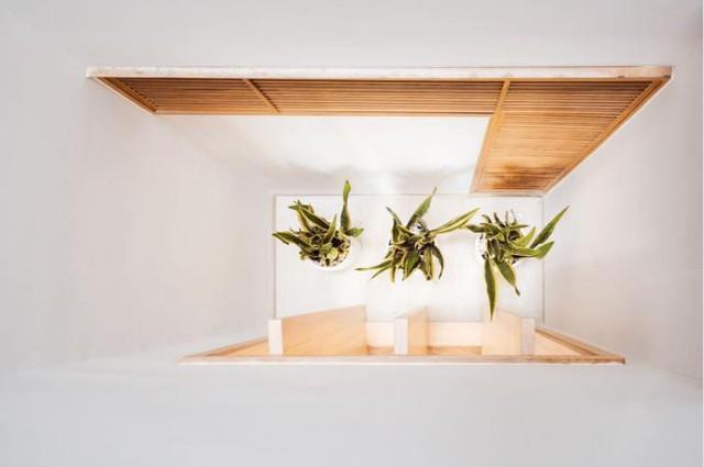 Rất nhiều loại cây xanh được trồng mang lại không gian xanh mát và sức sống cho ngôi nhà.