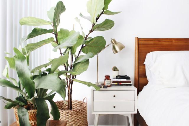 Sự xuất hiện của cây xanh ở mọi ngõ ngách của ngôi nhà không những làm đẹp không gian sống mà còn có vai trò quan trọng làm sạch bầu không khí trong nhà.