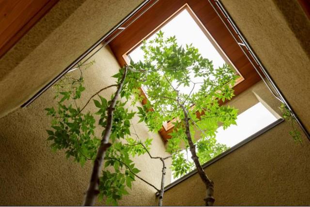Những khóm cây được chủ nhà nâng niu đâm thẳng lên sàn tầng 2 tạo không gian xanh mát tuyệt đẹp cho ngôi nhà.