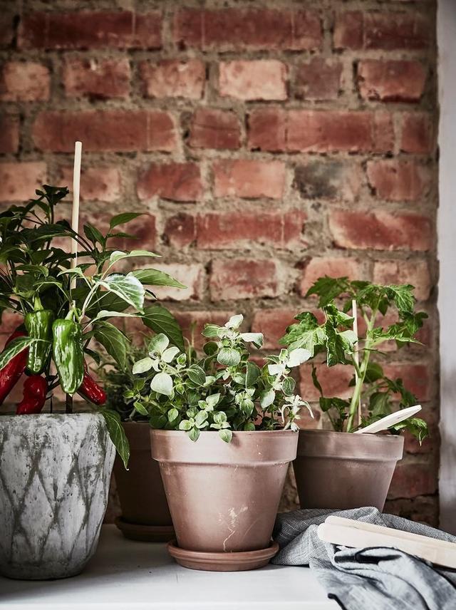 Những chậu cây xanh được trồng khắp mọi nơi mang màu xanh tươi mát cho góc nấu ăn.