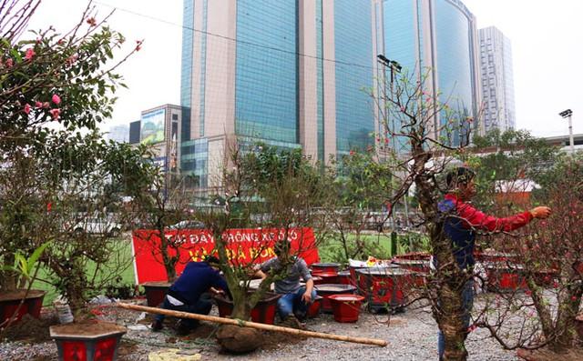 Các nhà vườn bày bán đào tại chợ hoa Thanh Xuân.