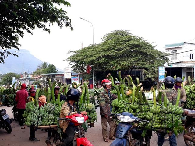Nông dân trồng chuối chủ yếu vận chuyển bằng xe gắn máy