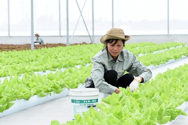 Trên khu đất sản xuất với diện tích gần 130 ha, VinEco Hà Nam sẽ triển khai khoảng 15 sản phẩm chủ lực phục vụ thị trường trong nước và xuất khẩu. Ảnh: VGP/Quang Hiếu
