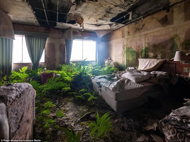 Những phòng ngủ sang trọng giờ đây chỉ còn vương tấm trải giường nhem nhuốc, giấy dán tường lột dở, nhiều loài cây dại phủ kín sàn nhà.
