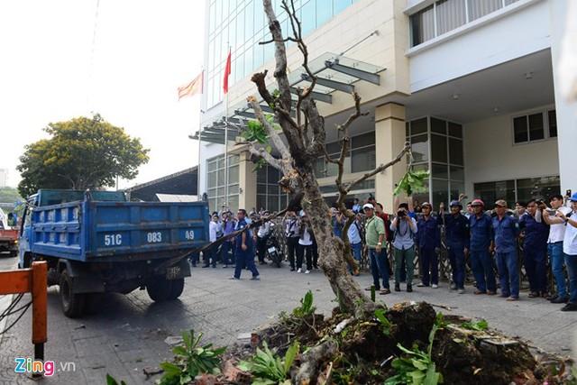 Nhổ cả cây được trồng trên vỉa hè Sài Gòn. Ảnh: Zing.vn