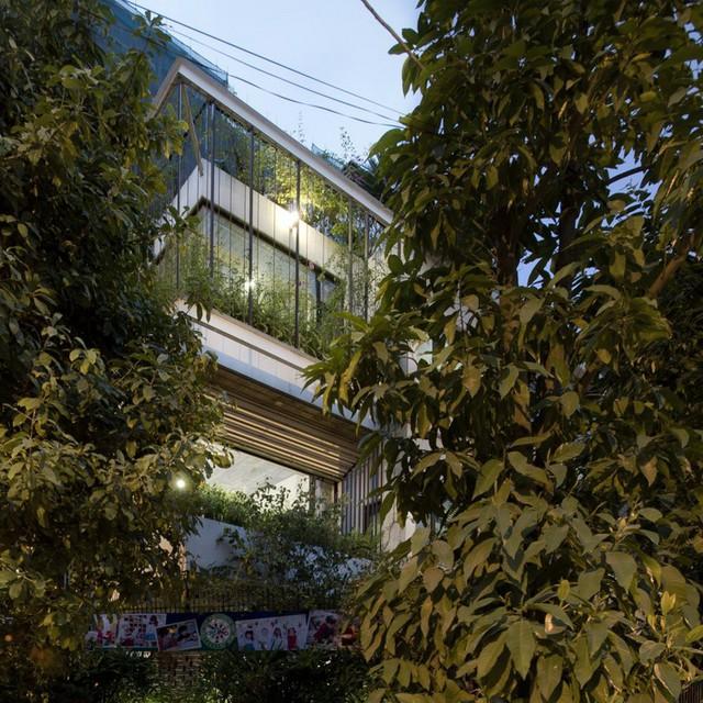 Cây xuất hiện ở khắp mọi nơi: từ vỉa hè, sân, tường nhà và trên sân thượng.