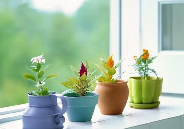 Đặt cây xanh ở đầu giường sẽ dẫn đến các bệnh về đường hô hấp như dị ứng hoặc hen suyễn (Ảnh: Internet).