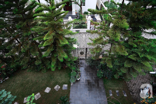 Lối đi nhỏ phủ xanh cây cỏ từ cổng vào nhà.