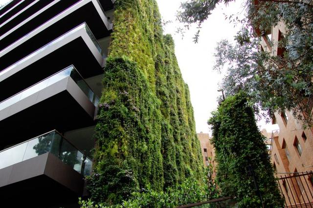 Tổng diện tích cây xanh bao phủ lên tới hơn 3.000 m2 với 115.000 cây xanh từ 10 loài thực vật của 5 họ khác nhau.