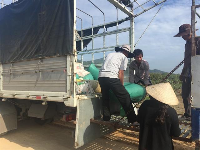 Ớt đã phơi được các cơ sở chế biến ớt tương thu mua chỉ gần 6.000 đ/kg