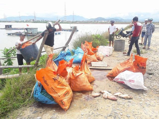 Người dân vớt cá chết, cho vào bao để vận chuyển lên bờ để tránh gây ô nhiễm
