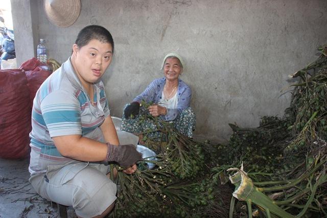 Năm nay cau tăng giá, người trồng cau ở An Lão rất phấn khởi