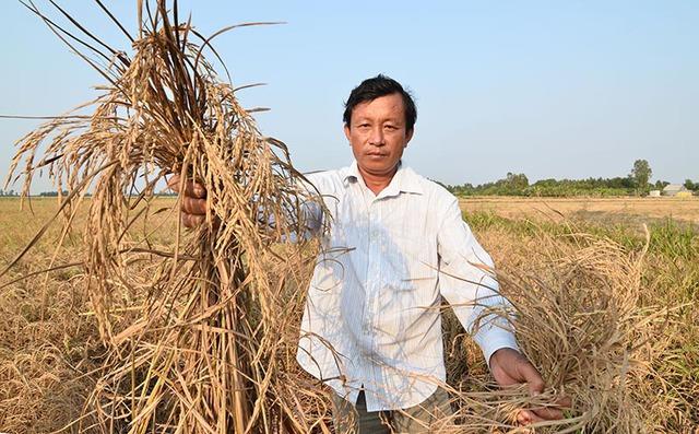 Người dân Kiên Giang lao dao vì ruộng lúa bị nhiễm mặn vào năm 2016. Ảnh: Đinh Tuấn