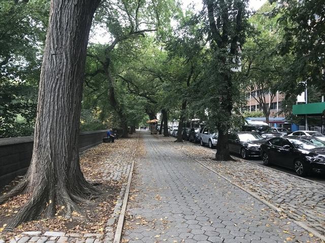 Con đường dẫn tới trường tràn ngập cây xanh, rải rác lá vàng trên vỉa hè trong một ngày ấm áp giữa tiết trời se lạnh của mùa thu tháng 10.