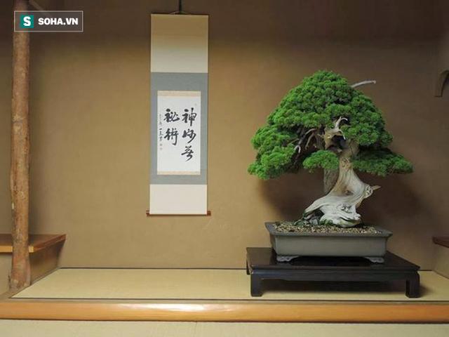 Cây bonsai hơn 800 năm tuổi trong vườn Shunka-en.