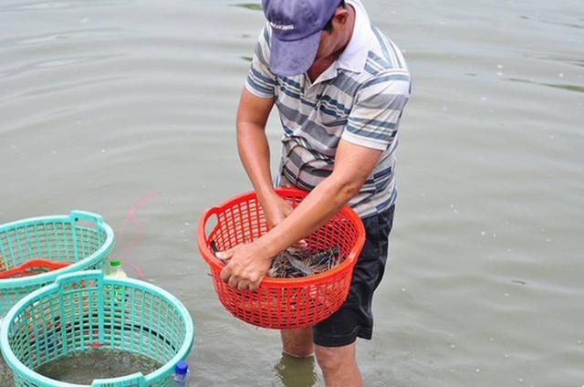 Việc nuôi tôm ở vùng núi mang nét đặc đáo của địa phương