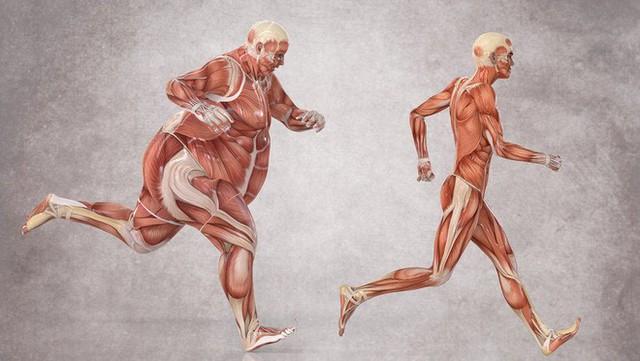 Khi một người bị béo phì, có rất nhiều chứ không phải chỉ một cơ quan trong cơ thể bị ảnh hưởng.