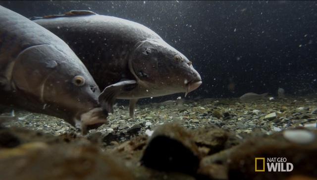 Nước sạch từ sông, suối ở núi sẽ chảy vào bể - nơi họ nuôi rất nhiều cá (Ảnh: Nat Geo Wild)