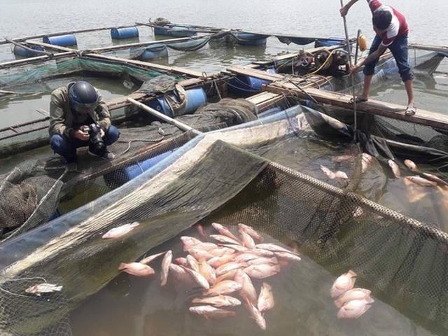 Cá chết nổi trắng mặt nước khiến người dân phải vớt và bán với giá rẻ mạt