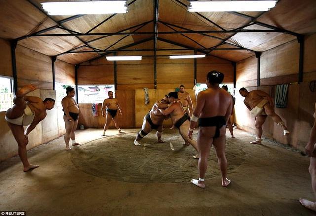 Tomozuna Oyakata, một võ sĩ sumo người Mông Cổ có buổi tập luyện tại đền Ganjoji Yakushido, Nagoya, Nhật Bản.
