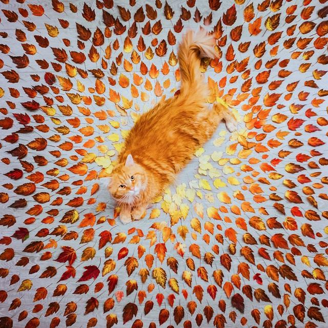 Một chú mèo nằm phơi mình trên những chiếc lá được sắp đặt gọn gàng tại nước Nga.