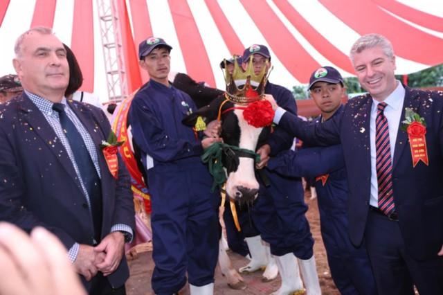 Cuộc thi Hoa hậu Bò sữa Mộc Châu được tổ chức hàng năm tại Mộc Châu, ngày hội tôn vinh nghề nuôi Bò sữa độc đáo và duy nhất tại Việt Nam
