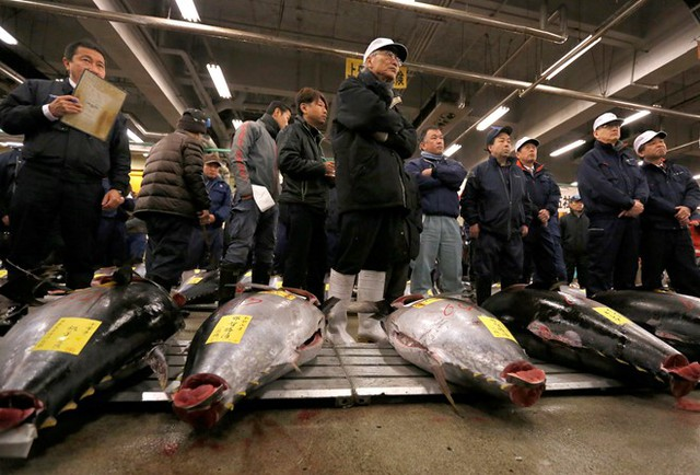 Vào ngày 5/1 đầu năm, người Nhật tham gia chợ cá lâu năm Tsukiji ở thủ đô Tokyo, mở phiên đấu giá cá ngừ vây xanh đầu tiên của năm. Chợ cá Tsukiji thành lập từ năm 1935. Ảnh: Reuters.