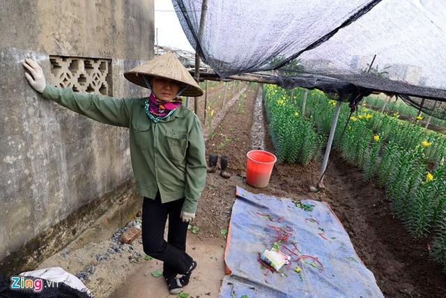 Nhà chị Nguyễn Thị Toán phải cầm cố sổ đỏ gần hai năm nay để có tiền trang trải cho việc trồng ly. Hiện tại, do việc trồng hoa không thuận lợi nên chị chưa lấy được sổ đỏ. Tết này lại không ấm rồi, chị nói.
