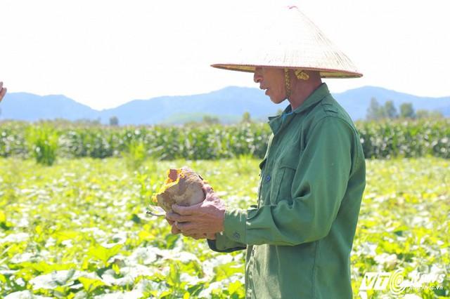 Nông dân xã Cư Yang rớt nước mắt trước cảnh bí đỏ đến kì thu hoạch mà không có người mua. (Ảnh: Thanh Hải)